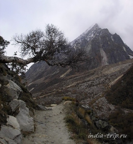 Дерево и гора