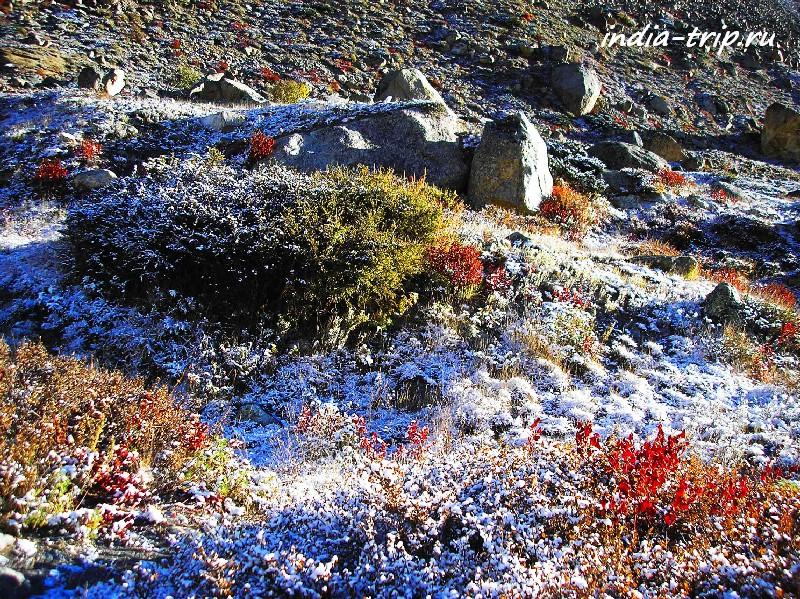 Гималайские травы в инее