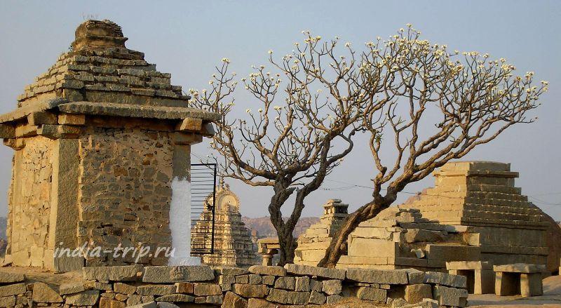 Хампи. Дерево возле храма