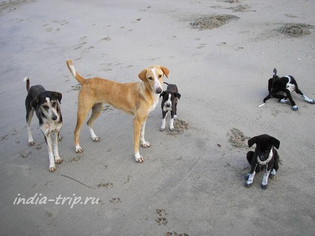 Собачонки на песке