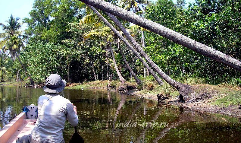 Пальмы над водой