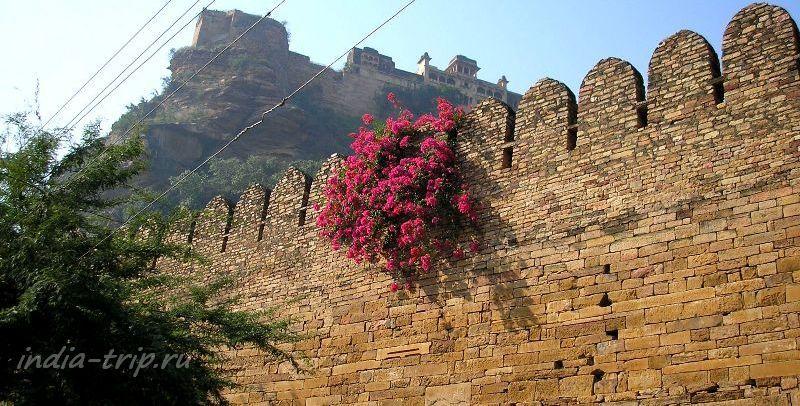 Цветы на крепостной стене