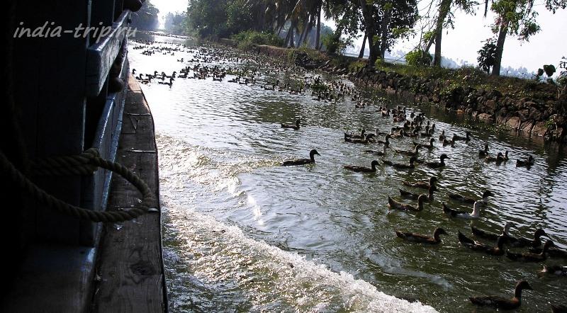 Керала. Канал