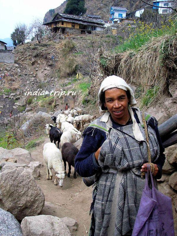 Местная женщина и козы