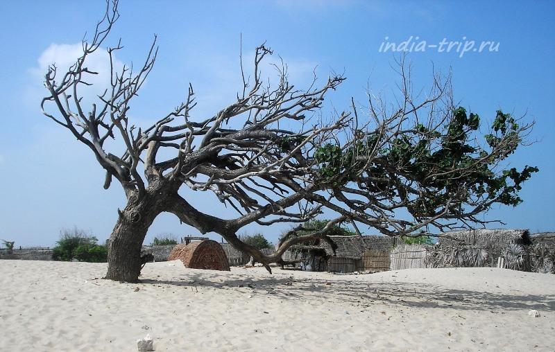 Дерево, погнутое тайфуном