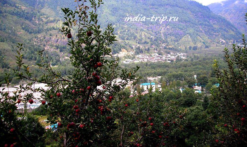 Яблоня и вид на долину Куллу