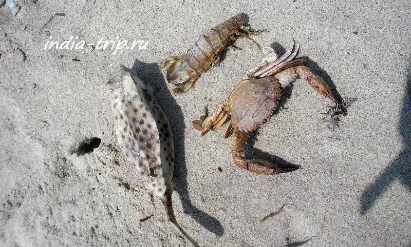 Квадратная рыба
