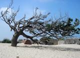 Дерево после тайфуна