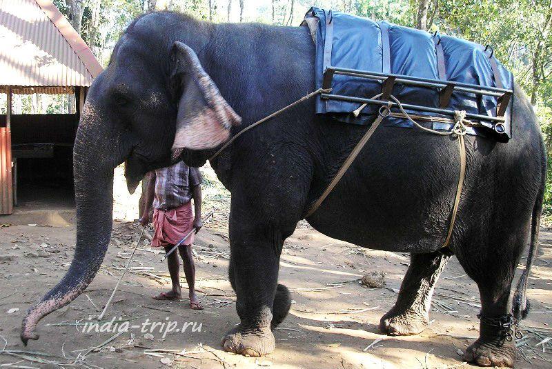 Чудо чудное - слон