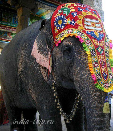 Слон с украшением