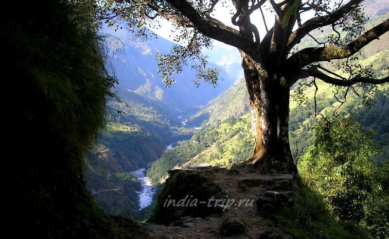 Дерево и река Марсъянди