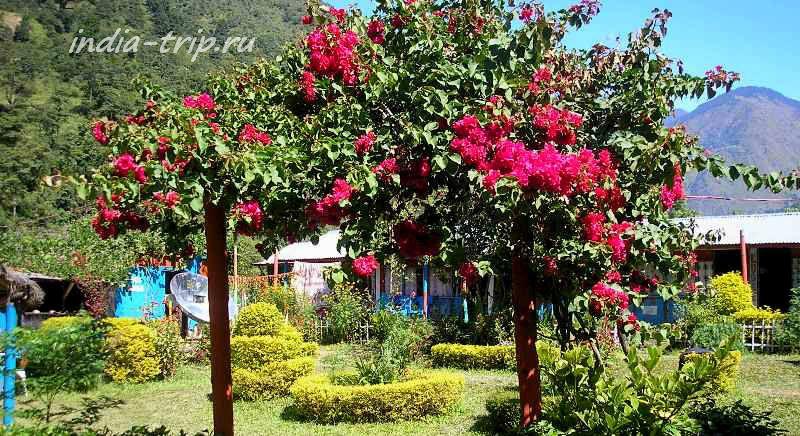 Цветущая деревня Ngadi