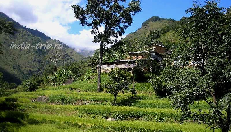 Непал. Зеленые поля