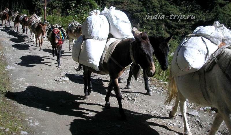Лошадки, ведущие груз