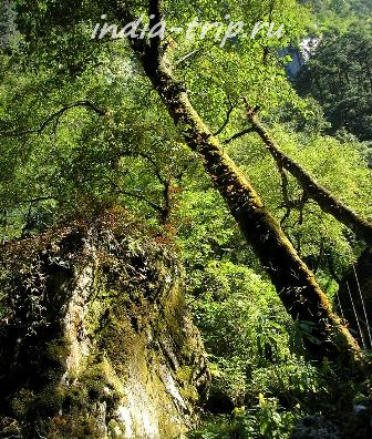 Непал, лес
