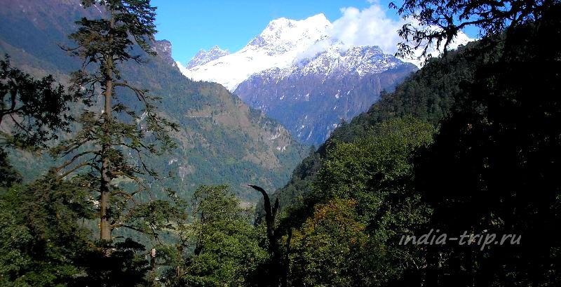 Горы и лес