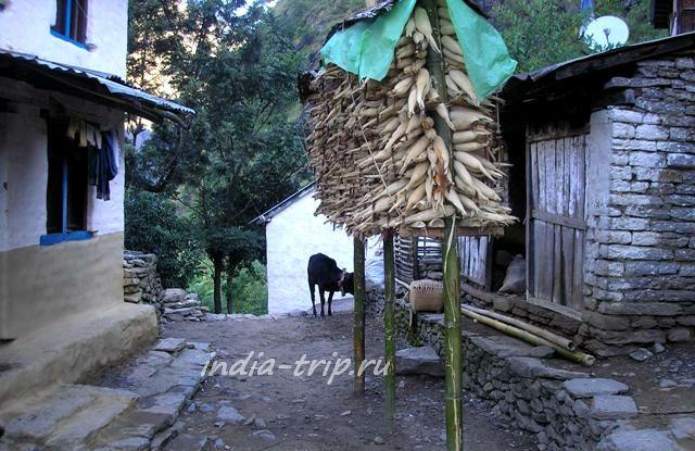 Непал. Кукуруза
