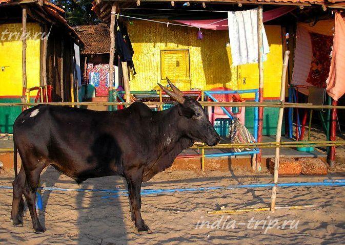 Наш домик и корова