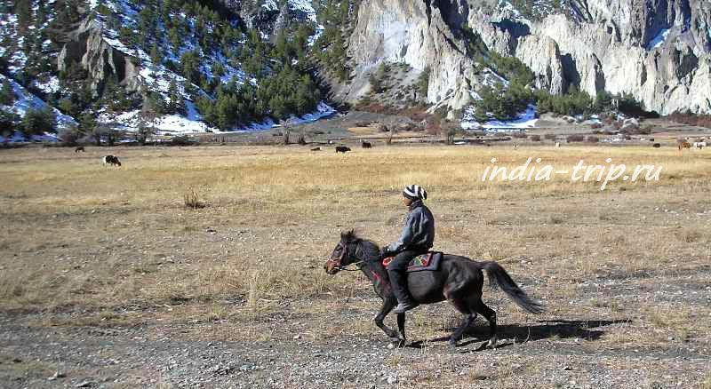 Непалец на лошади