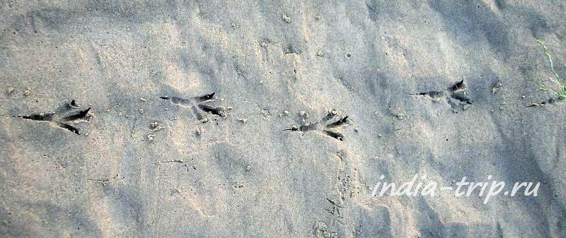 Следы птиц на песке