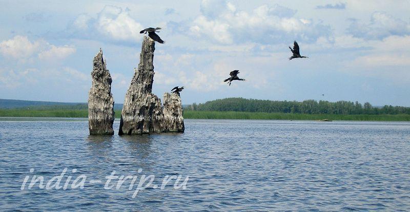 Васильевские острова