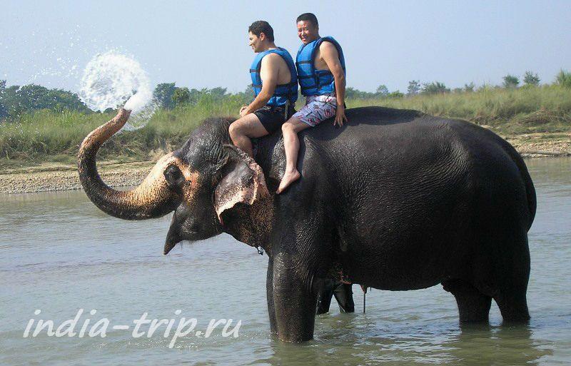 Слон обливает водой