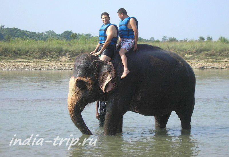 Желающие покататься на слоне