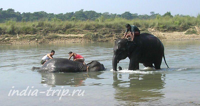 Слоны в реке