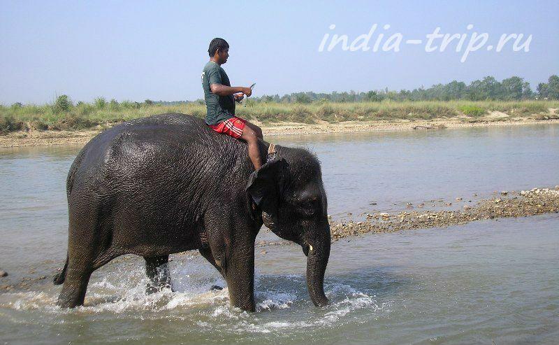 Слон заходит в реку