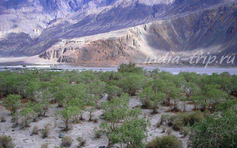 Долина Нубра - пески, кустарник, река