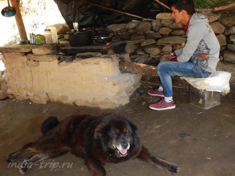 Повар и собака