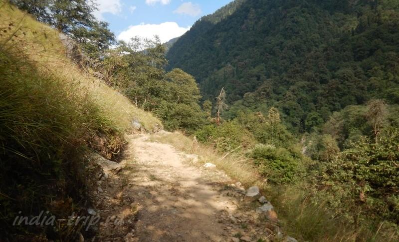 Луга на склоне и тропа